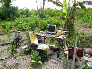 office_niue
