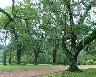 Natchez and the Trace: Historic horrors and natural beauty