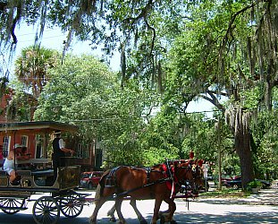 Savannah, Georgia: Midday in the Gardens