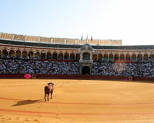 GUEST WRITER JAMES BLICK wonders what he will be when he grows up . . . in Spain